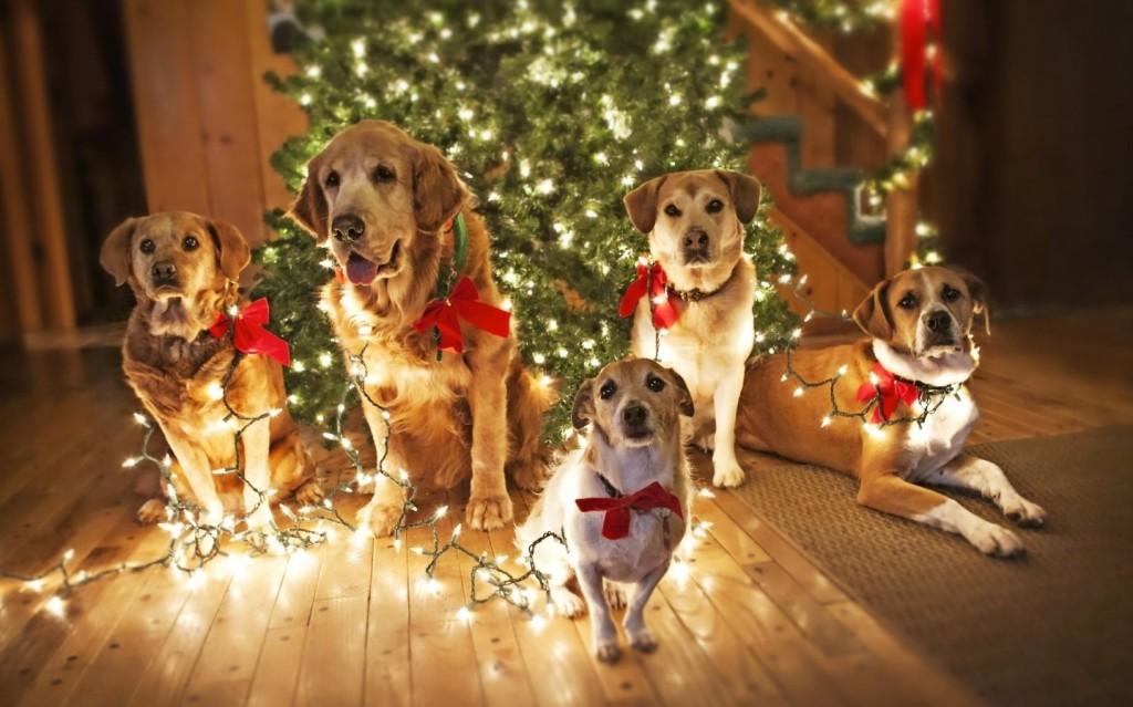 гифки-новый-год-собака-живность-870461